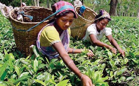 Объем экспорта чая из Индии