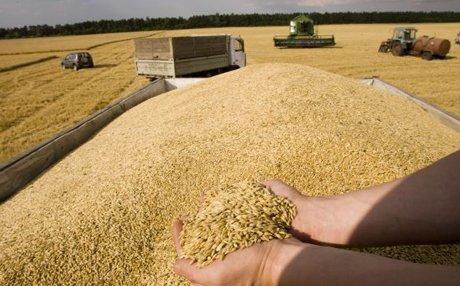Крым начал экспорт зерна в Саудовскую Аравию и на Кипр